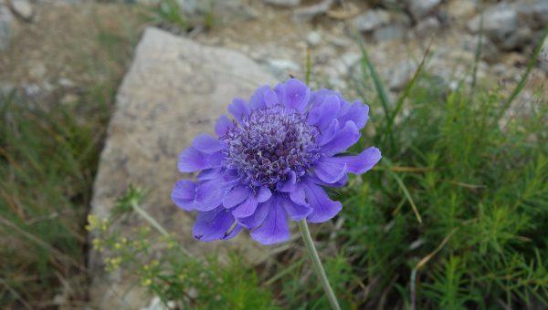 八方尾根は花真っ盛り