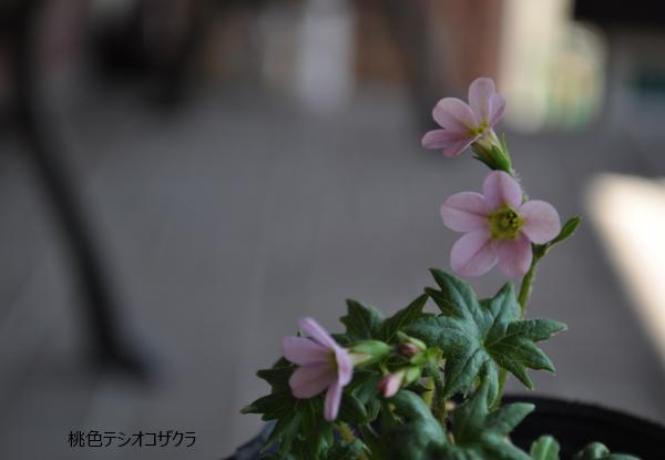 DSC_7923