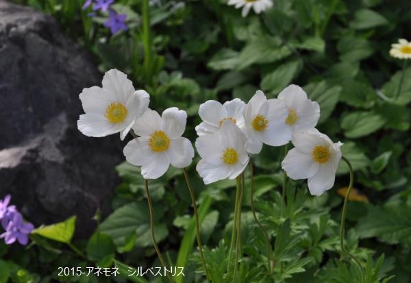 DSC_8125